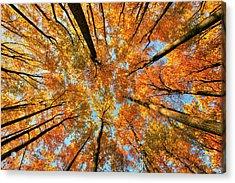 Beneath The Canopy Acrylic Print
