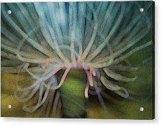 Beneath The Waves Acrylic Print by Jack Zulli