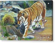 Bengal Tiger Acrylic Print