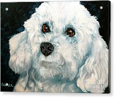 Bichon Frise Acrylic Print by Susan A Becker