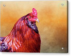 Big Red Rooster Acrylic Print by Carol Leigh