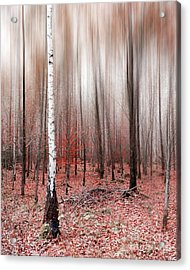 Acrylic Print featuring the photograph Birchforest In Fall by Hannes Cmarits