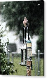 Acrylic Print featuring the photograph Bird Bath by Wanda Brandon