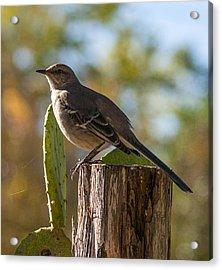 Bird On A Post Acrylic Print