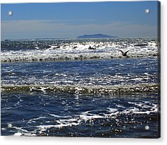 Bird On A Wave  Acrylic Print by Robin Hernandez
