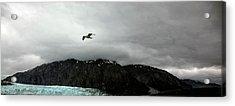 Acrylic Print featuring the photograph Bird Over Glacier - Alaska by Madeline Ellis