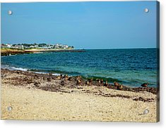 Acrylic Print featuring the photograph Birds On The Beach by Madeline Ellis