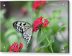 Acrylic Print featuring the photograph Black And White Butterfly  by Raphael Lopez