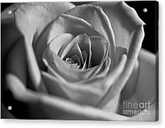 Acrylic Print featuring the photograph Black And White Rose by Micah May