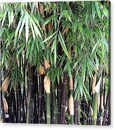 Black Bamboo Acrylic Print by Mary Deal