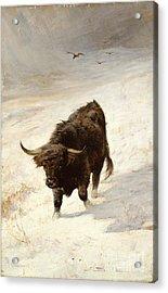 Black Beast Wanderer Acrylic Print