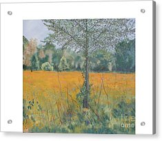 Black Eyed Susans Acrylic Print by Hal Newhouser