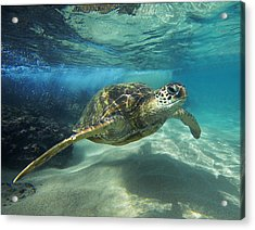 Black Rock Turtle Acrylic Print