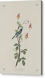 Black-throated Blue Warbler Acrylic Print by Dreyer Wildlife Print Collections