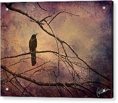 Blackbird 2 Acrylic Print by Christine Hauber