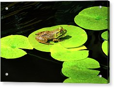 Blending In Acrylic Print by Greg Fortier