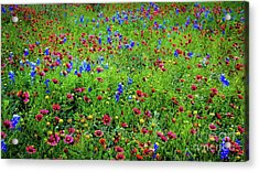Acrylic Print featuring the photograph Blooming Wildflowers 537 by D Davila