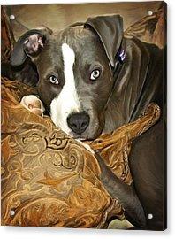 Blu Acrylic Print by Deanna Maxwell