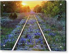 Blue Bonnets On Railroad Tracks Acrylic Print by Jeremy Woodhouse