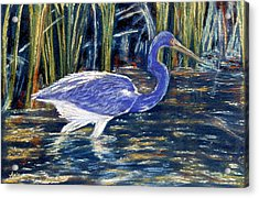 Acrylic Print featuring the pastel Blue Heron by Jan Amiss