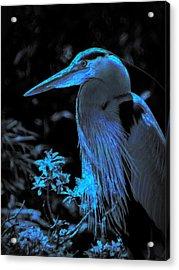 Acrylic Print featuring the photograph Blue Heron by Lori Seaman