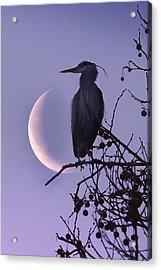 Blue Heron Moon Acrylic Print