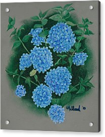 Blue Hibiscus Acrylic Print