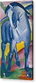 Blue Horse Acrylic Print by Franz Marc