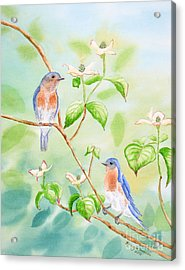 Bluebirds In Dogwood Tree Acrylic Print by Kathryn Duncan