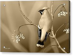Acrylic Print featuring the digital art Bohemian Waxwing In Sepia by John Wills