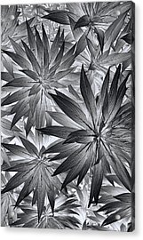 Acrylic Print featuring the photograph Botanical by Wayne Sherriff