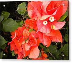 Acrylic Print featuring the painting Bouganvilla 1 by Renate Nadi Wesley