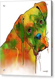 Boxer Acrylic Print by Marlene Watson