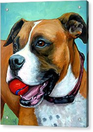 Boxer With Red Ball Acrylic Print by Dottie Dracos