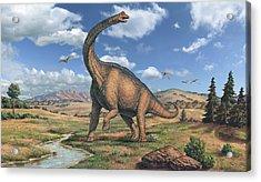 Brachiosaurus Dinosaur Acrylic Print by Joe Tucciarone