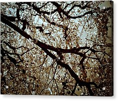 Branch One Acrylic Print