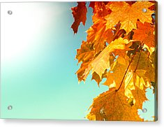 Yellow Autumn White Sun Acrylic Print
