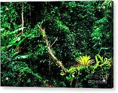 Bromeliads El Yunque National Forest Acrylic Print