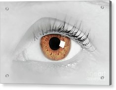 Brown Eye Of A Young Woman. Close-up. Focus On Iris Acrylic Print by Michal Bednarek