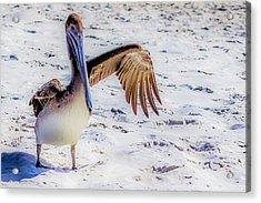 Brown Pelican Wave Acrylic Print