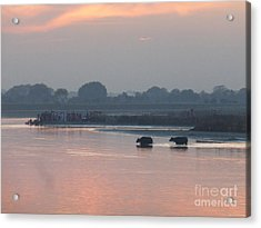 Buffalos Crossing The Yamuna River Acrylic Print