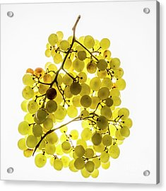 Bunch Of White Grapes Acrylic Print by Bernard Jaubert