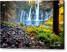 Burney Falls  Acrylic Print by Kelly Wade