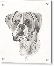 Buster Acrylic Print by Josh Bennett