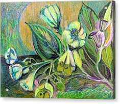 Buttercups Acrylic Print by Mindy Newman