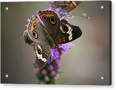 Acrylic Print featuring the photograph Buckeye Butterfly by Cathy Harper