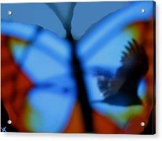 Butterfly Birds Collection  Acrylic Print by Debra     Vatalaro