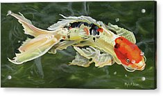 Butterfly Koi Acrylic Print