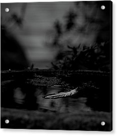A Feeling Of Floating Weightlessly - Bw Acrylic Print by Marilyn Wilson