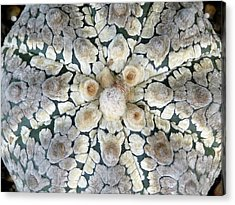 Cactus 2 Acrylic Print